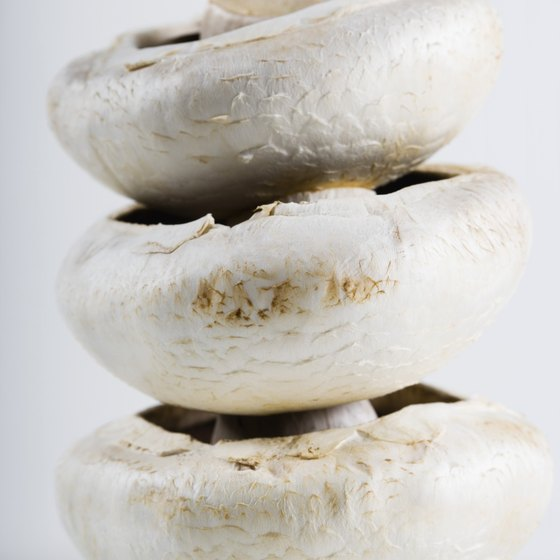 To retain the most nutrients, mushrooms need to be canned soon after harvesting.