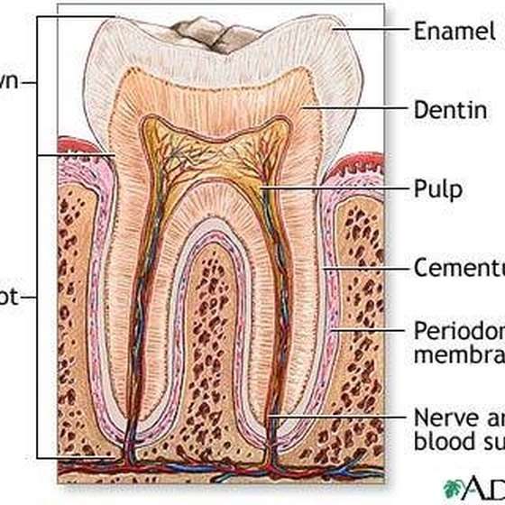 Difference Between Periodontist & Endodontist
