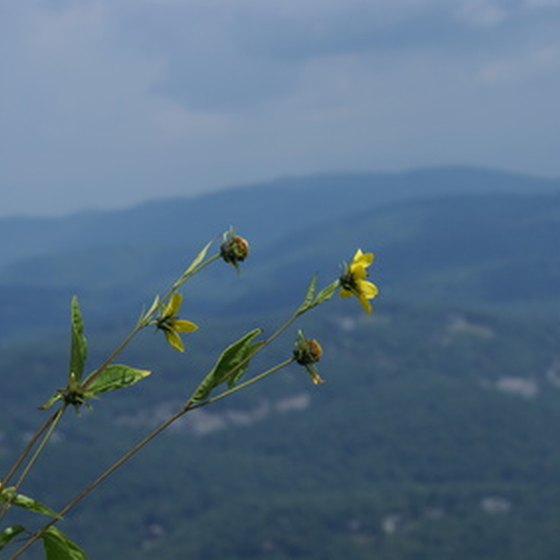 Asheville lies in the scenic Blue Ridge Mountains of North Carolina.
