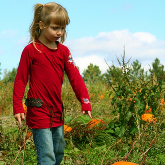 Kids can pick pumpkins at Libertyville area farms.
