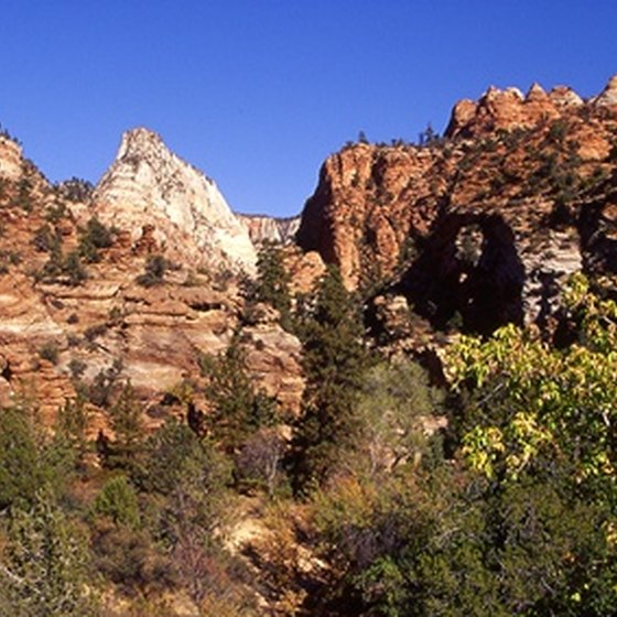 Zion National Park is arid but not entirely devoid of trees.