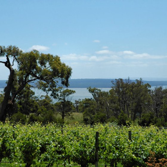 Pedal past the vineyards of South Australia on a bicycle tour.