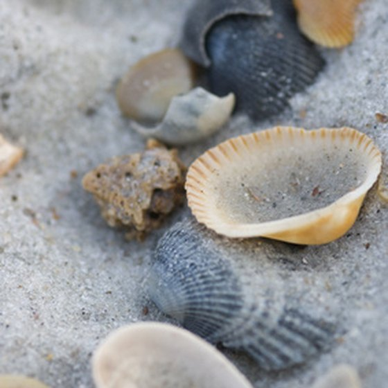 Seashells can be found scattered along many Texas beaches.