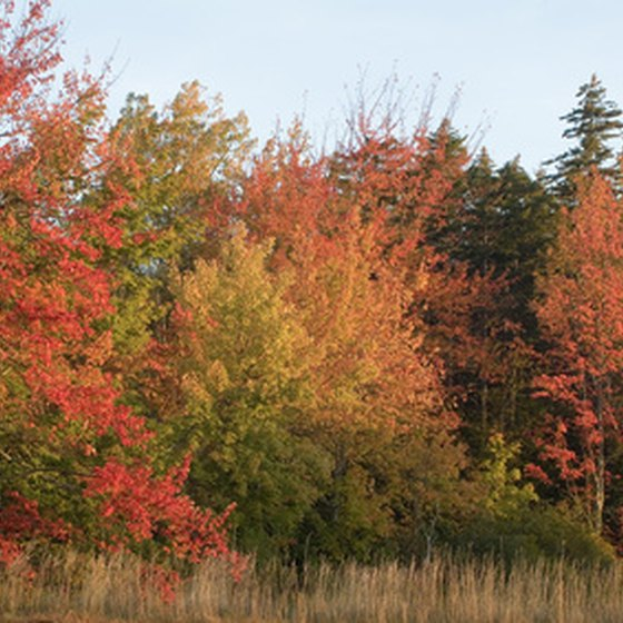 Fall foliage attracts cyclists to Maine and other New England states.