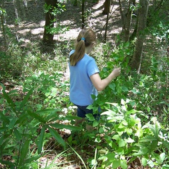 Spend an afternoon exploring the nature trails in Tunica.