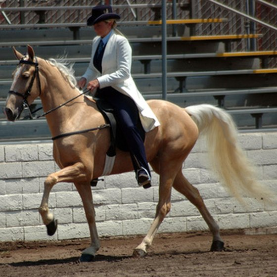 The Tennessee walking horse, a gentle mount, was bred for work.