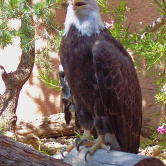 Bald eagles and several other bird species can be seen near Taos, New Mexico.