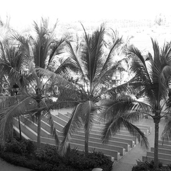 Palm trees in Nuevo Vallarta