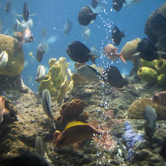 The Georgia Aquarium is located in downtown Atlanta and is the world's largest.