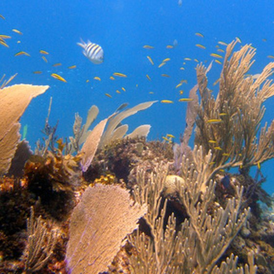 Cozumel's reefs are home to abundant marine life.
