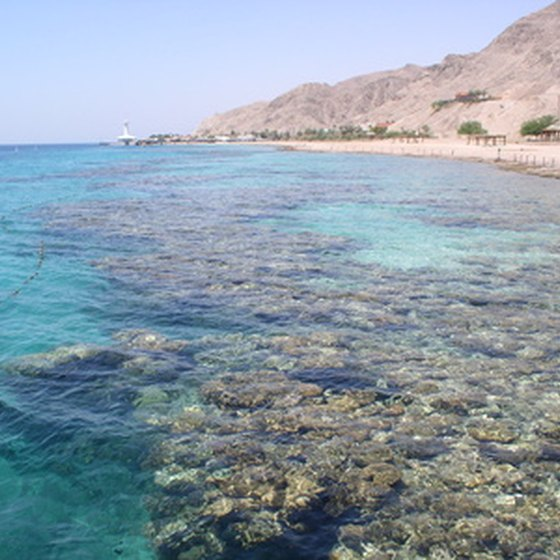 Nothing but bacteria and sometimes algae lives in the Dead Sea because of the high mineral and salt content.