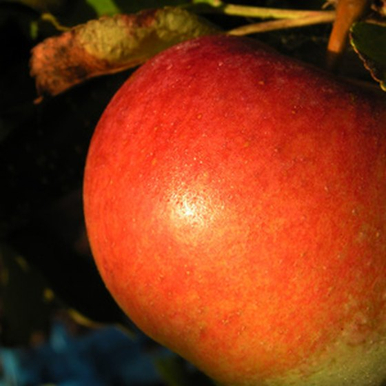 Ellijay hosts an annual apple festival.
