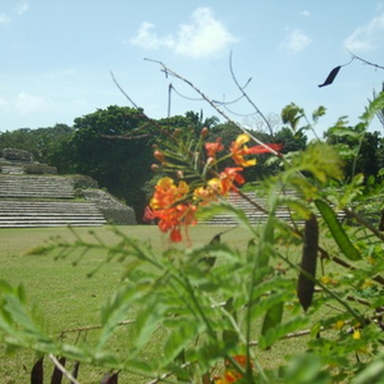 The jungle of Belize