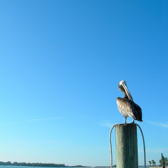 St. Petersburg's downtown area offers beautiful views of Tampa Bay.