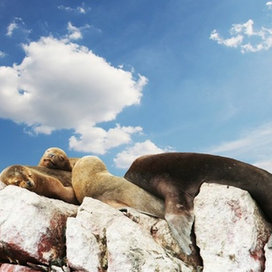 South America cruises are full of surprises, from sudden sea-lions to weather.