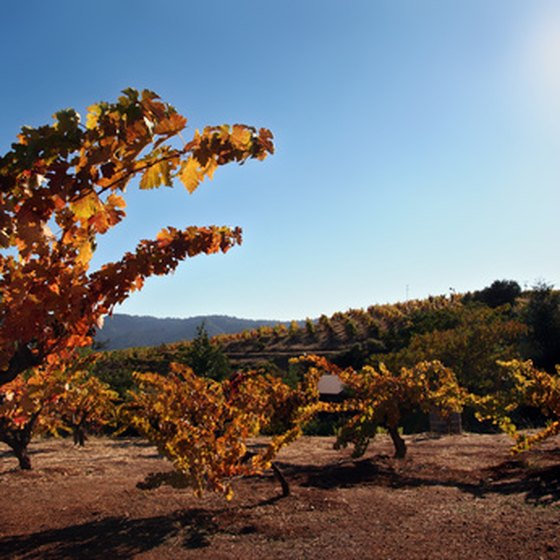 Sonoma offers a variety of wine-country vacations.