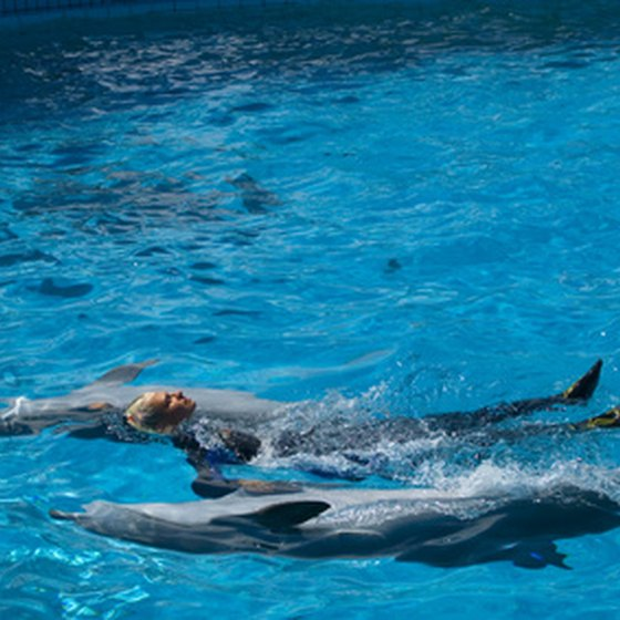 A dolphin trainer at work