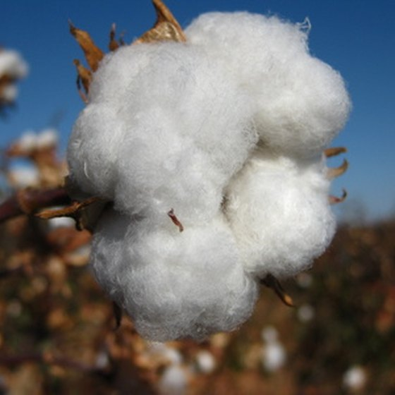 Cotton, tobacco, indigo, and rice were staple crops on Southern plantations.