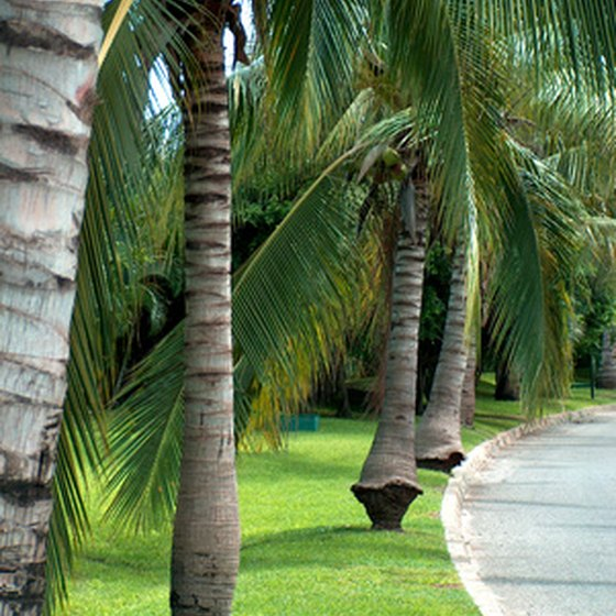 Palm trees sway in the breeze.