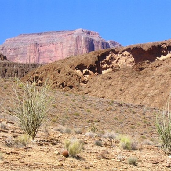 The Arizona desert can reach temperatures of 130 degrees in the shade.