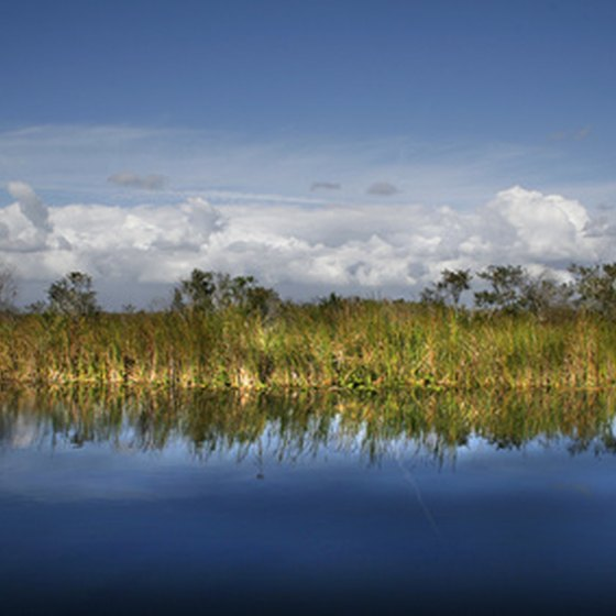 The Everglades lure visitors to Southern Florida.