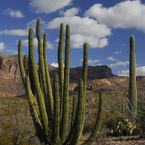 Lukeville, Arizona is in the heart of Organ Pipe Cactus country