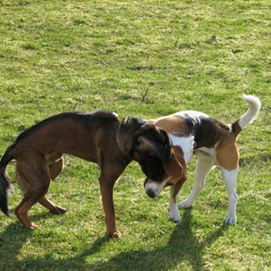 Dogs socialize in a yard.