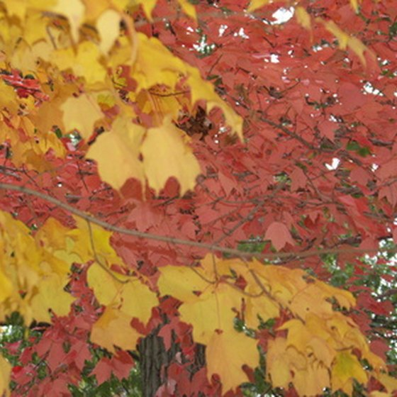 Autumn day hikers will see incredibly beautiful displays of fall foliage.