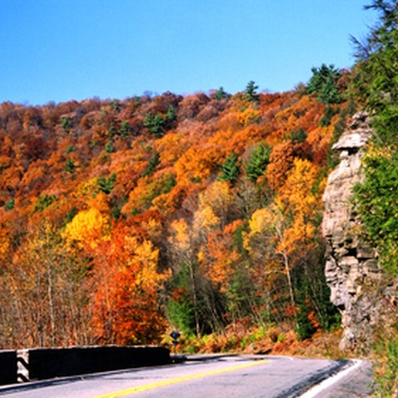 The fall leaves provide a scenic view along the Cayuga Scenic Byway.