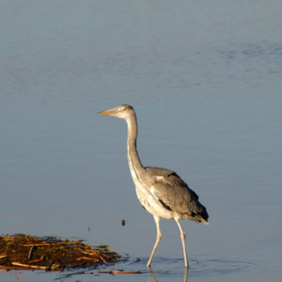 You might catch a peek at a heron on one of Bradenton's courses.