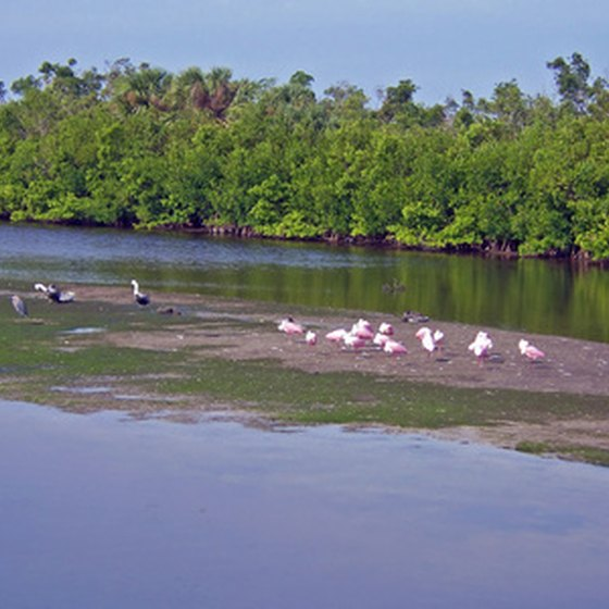 Sanibel Island is full of tropical wildlife and relaxing beaches.