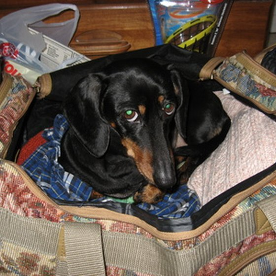 Getting your dog ready to travel.