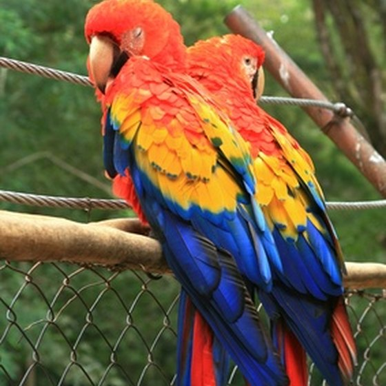 Honduras is home to hundreds of bird species.