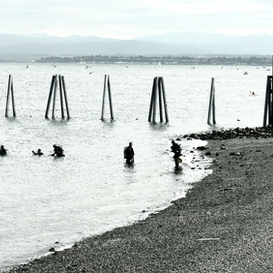 Shore divers at an old pier.