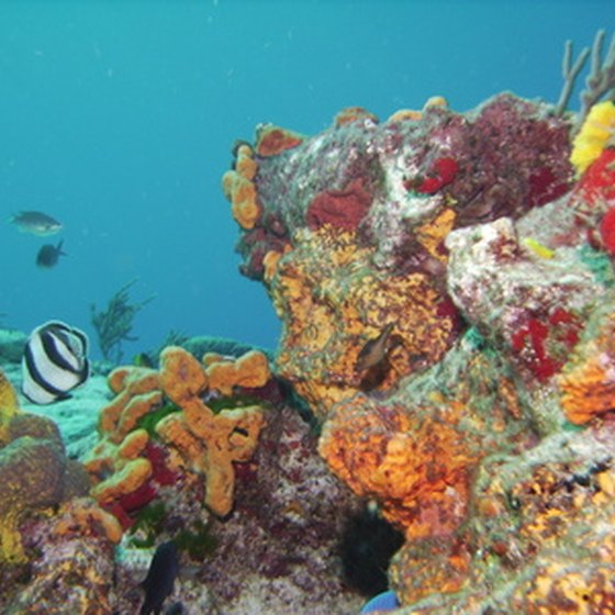 The Caribbean contains beaches and coral reefs.
