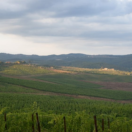 Tuscany is known for its hillsides covered in grapevines.