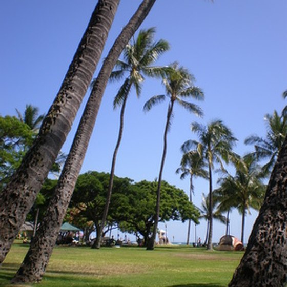 Palm trees in Honolulu.