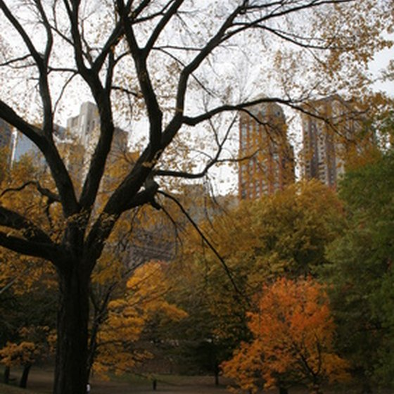 Central Park has over 25 million visitors each year.