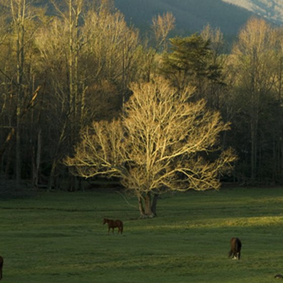 Townsend is located next to Cades Cove, part of the Great Smoky Mountains National Park.