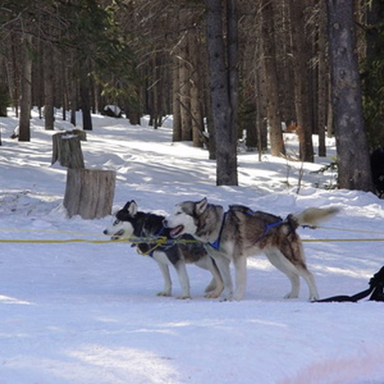 Dog sled tours allow you to experience dog sledding.
