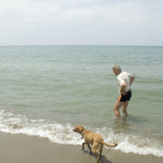 Have fun with your furry family at one of Florida's most beautiful beaches.