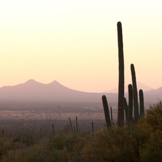 Though the saguaro is one of the most common desert icons, it only grows in the Sonoran Desert.
