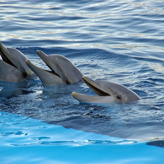 Swim with dolphins in the Florida Keys while learning about consevation of the species.