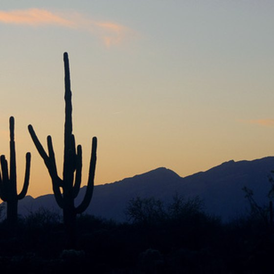 Two cacti set against the painted Arizona sky at dusk.