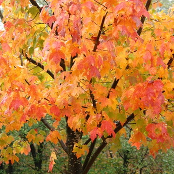 The Buckeye State offers an official online fall foliage countdown.