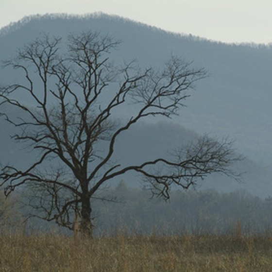 Visitors may spot deer and bears at Cades Cove in the Smokies.