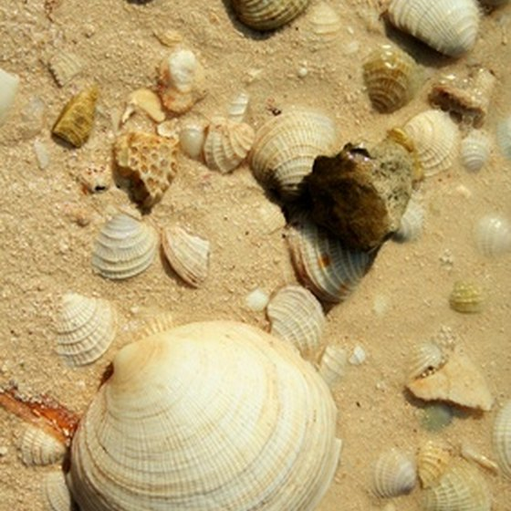 Sanibel Island is famous for its seashell-packed beaches.