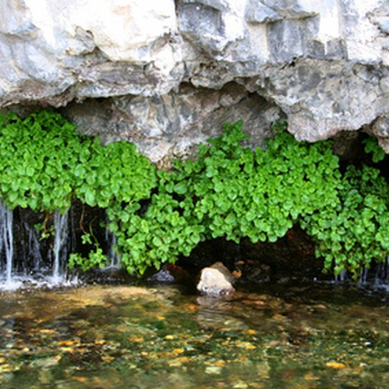 Bluff Springs, Florida, is a natural freshwater spring.