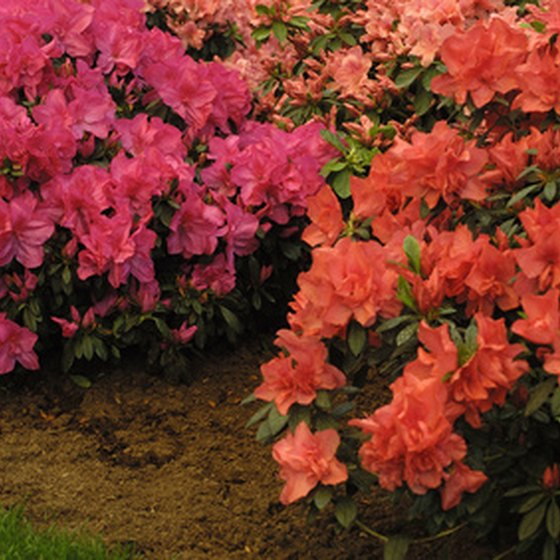 Some visitors to Texas might enjoy a spring journey along the Azalea Trail.