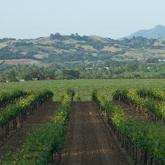 Tour the vineyards of Sonoma County.